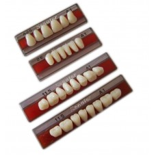 Wright Senator Acrylic Teeth - 1 Set